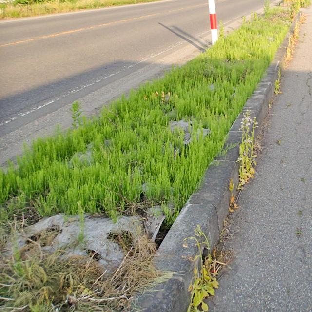<p>杉皮防草マット施工前の状態です。草が花壇を覆い尽くしています。</p>